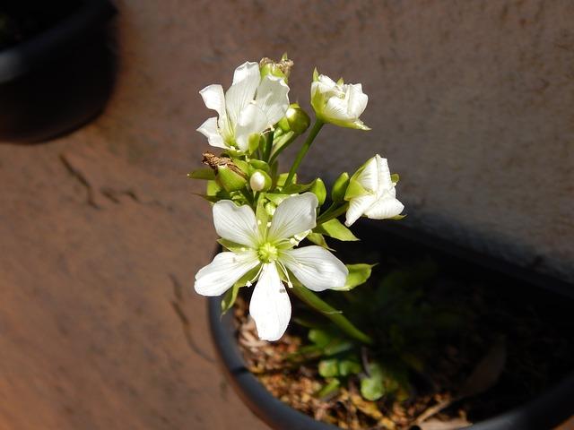 Насекомоядное растение