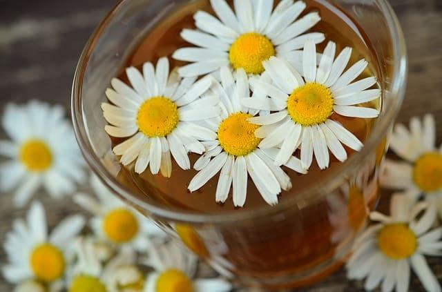 Мазь из цветков ромашки