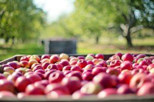 Яблочный уксус по Джарвису