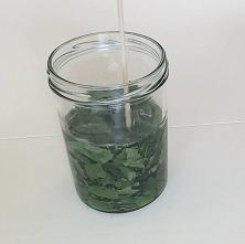 Березы листья и масло
